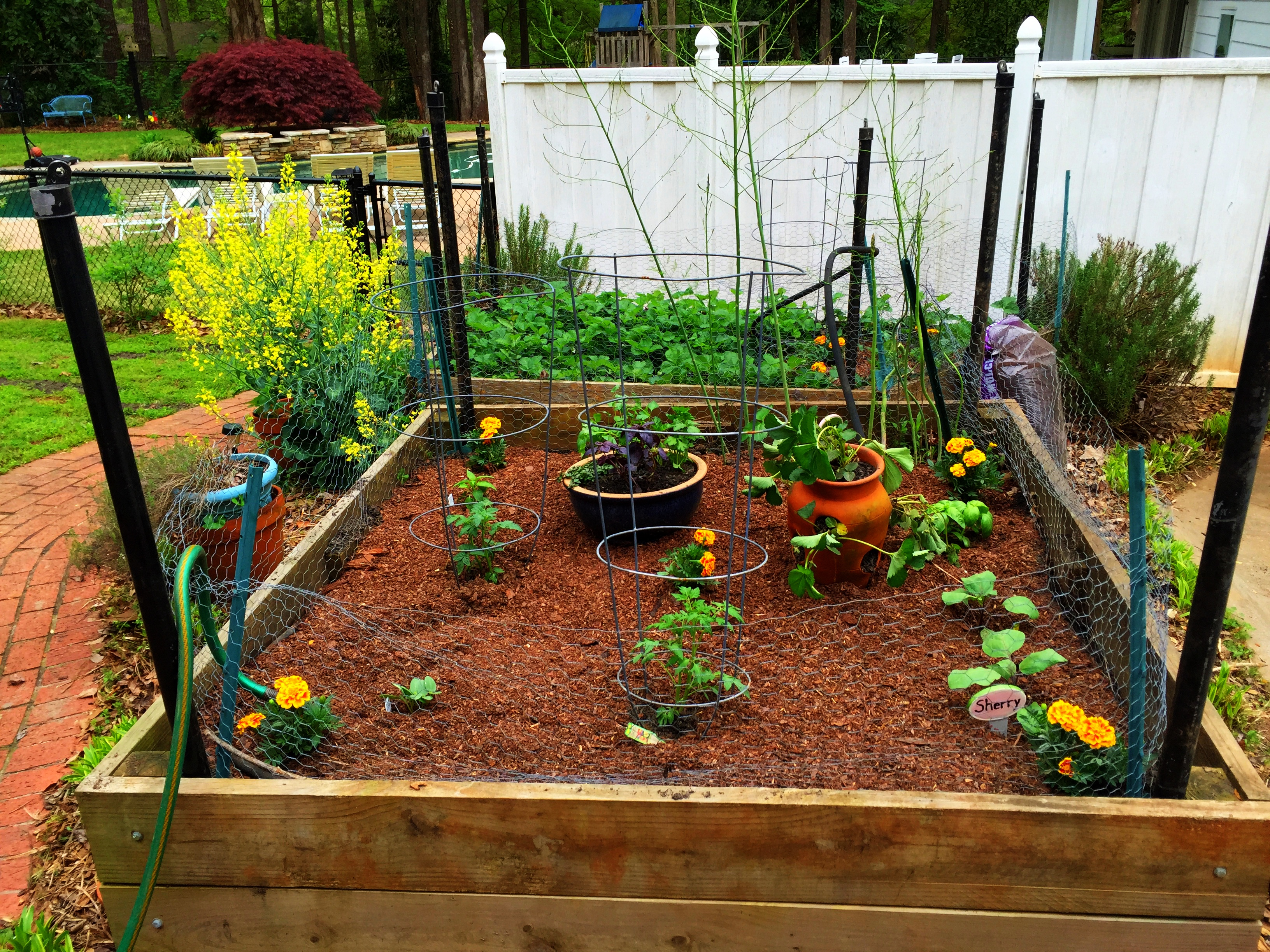 Summer Gardening – Southern Fried Nutrition